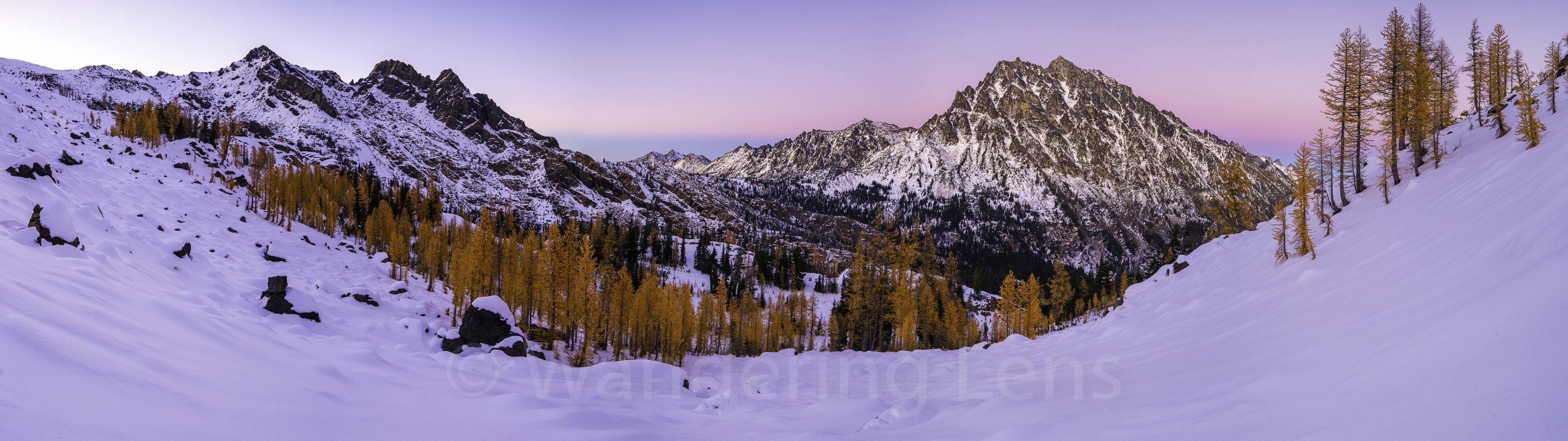 Mount Stuart Larches